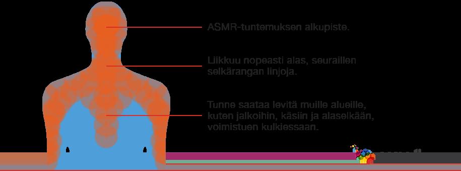 ASMR tuntemus